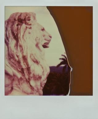 lionexposed